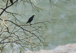 Halfway between stillness and flight